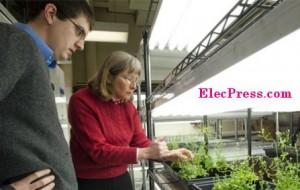 گیاهانی برای مبارزه با تروریست ها