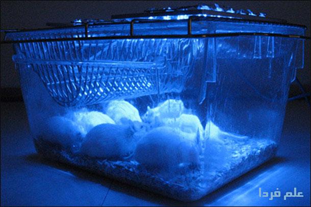 کاربران فیس بوک موش آزمایشگاهی سرمایه دارها