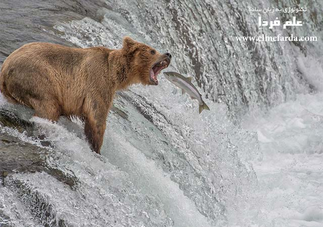 "Catch of the Decade,"" Katmai National Park, Alaska, USA, Nature Category"
