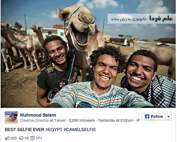 عکس سلفی با شتر ها یکی از مد های خنده دار در اینترنت