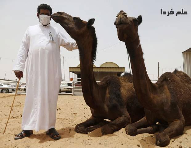 شتر های عربستان سعودی مهم ترین منشا ویروس مرس MERS
