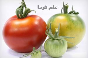 علت تغییر رنگ گوجه فرنگی